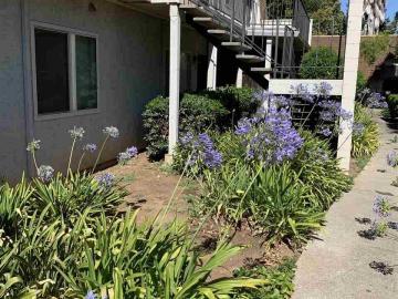 3641 Clayton Rd unit #8, Clayton Hills, CA